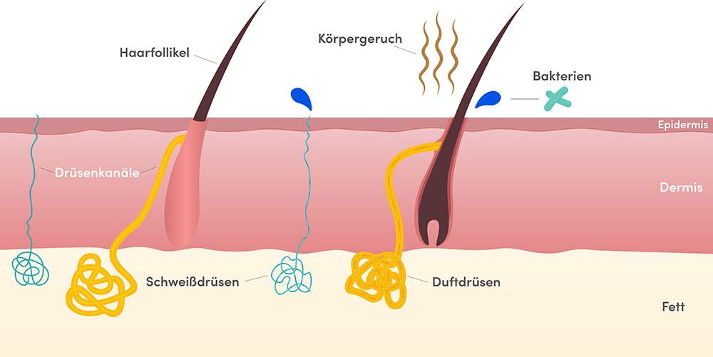 Hyperhidrose behandeln in der Klinik Dr. Katrin Müller in Hannover